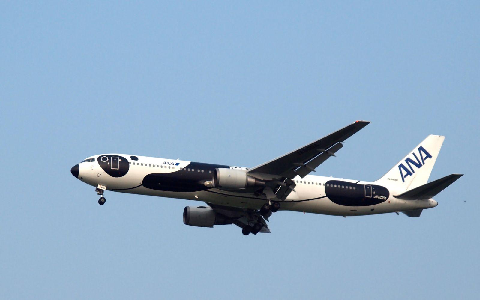 今天浦东机场打飞机,打鸟